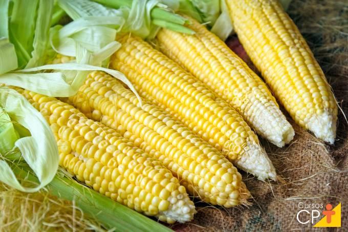 7 pragas que atacam o milho