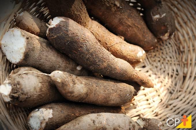 Perguntas e respostas sobre cultivo de mandioca
