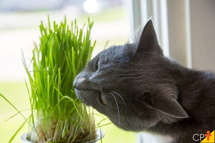 Gato comendo planta - imagem ilustrativa
