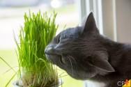 Quais plantas são tóxicas para cães e gatos?
