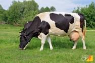 3 principais raças de gado leiteiro