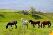 Perguntas e respostas mais comuns sobre o manejo de cavalos