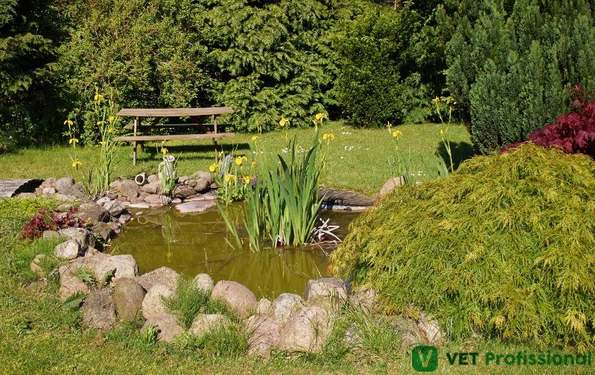 Jardim filtrante: para que serve e como construir?   Artigos VetProfissional