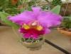 Plantio da orquídea pode ocorrer de três formas