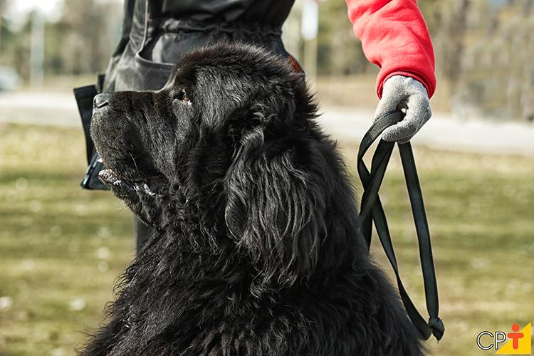 Cachorro peludo - imagem ilustrativa
