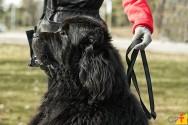 Cachorros: como manter o pelo bonito e saudável?