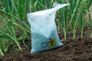 Hortaliças: dicas para adubar olerícolas corretamente