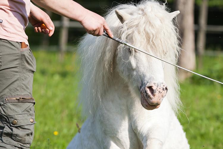 Cavalo sendo adestrado - imagem ilustrativa