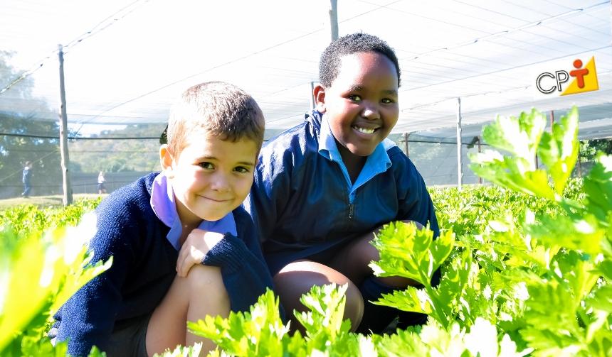 Horta didática: projeto escolar que envolve, motiva e ensina matemática   Notícias CPT