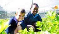 Horta didática: projeto escolar que envolve, motiva e ensina matemática