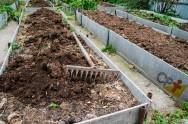 Horta escolar em lajes cimentadas: isso é possível?
