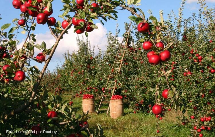 Como implantar um pomar de macieiras lucrativo