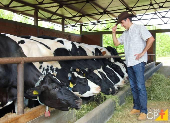 Gado leiteiro: vantagens e desvantagens do confinamento free-stall