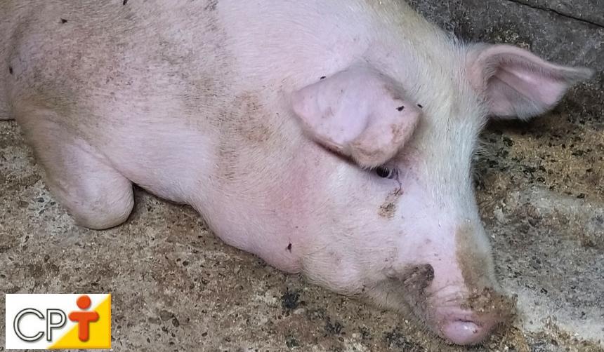 Cria porcos? Trate adequadamente esterco e resíduos e livre-se das moscas   Artigos CPT
