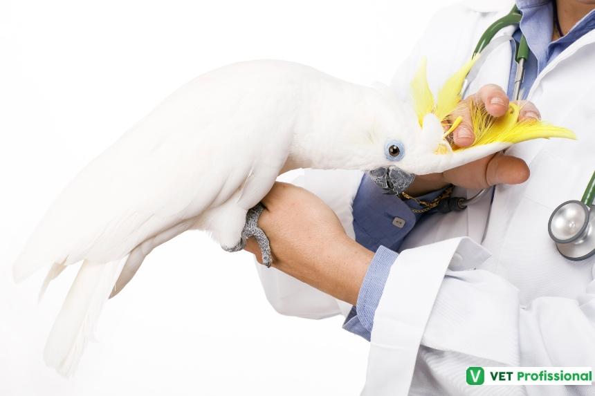 Mercado de pets exóticos cresce e pede por médicos veterinários especializados   Artigos VetProfissional