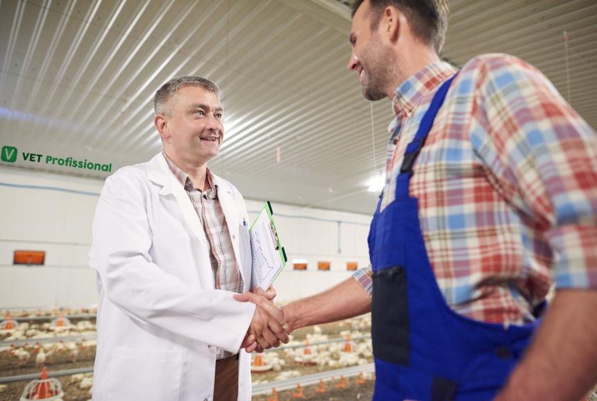 Sr. Veterinário, saiba mais sobre o Programa Nacional de Sanidade Avícola - PNSA   VetProfissional