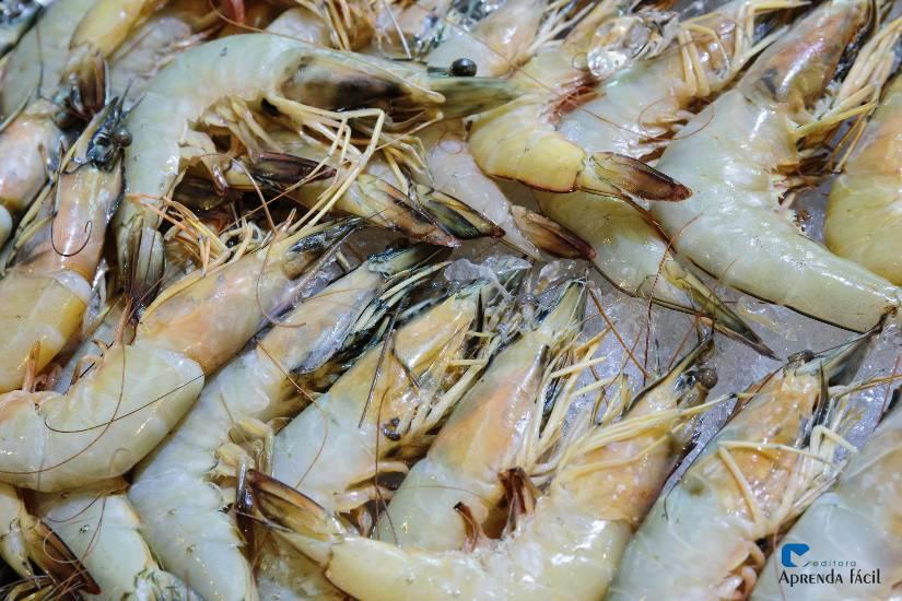 4 regimes de produção para engorda de camarões marinhos