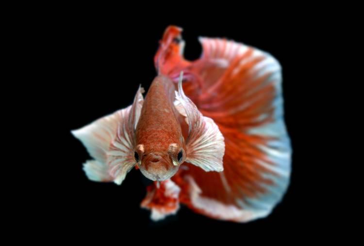 5 principais doenças comuns em peixes de aquário