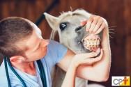Odontologia equina: distúrbios de oclusão