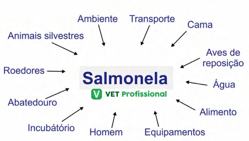 Fontes de contaminação por salmonela   VetProfissional