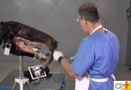 Odontologia equina: Oroscopia