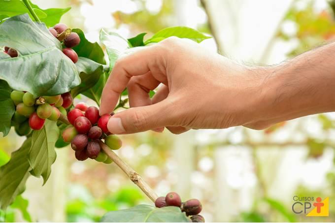 Fatores importantes na escolha da área de plantio de café