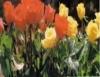 Produção de flores, uma bela e rentável alternativa