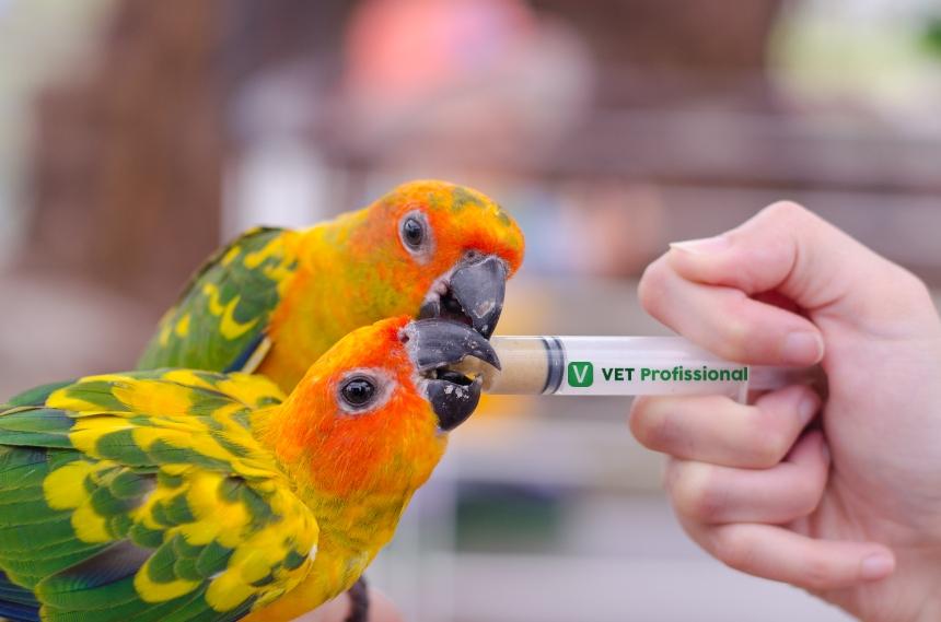 Aves em estado crítico: o que o veterinário deve fazer?    Artigos VetProfissional