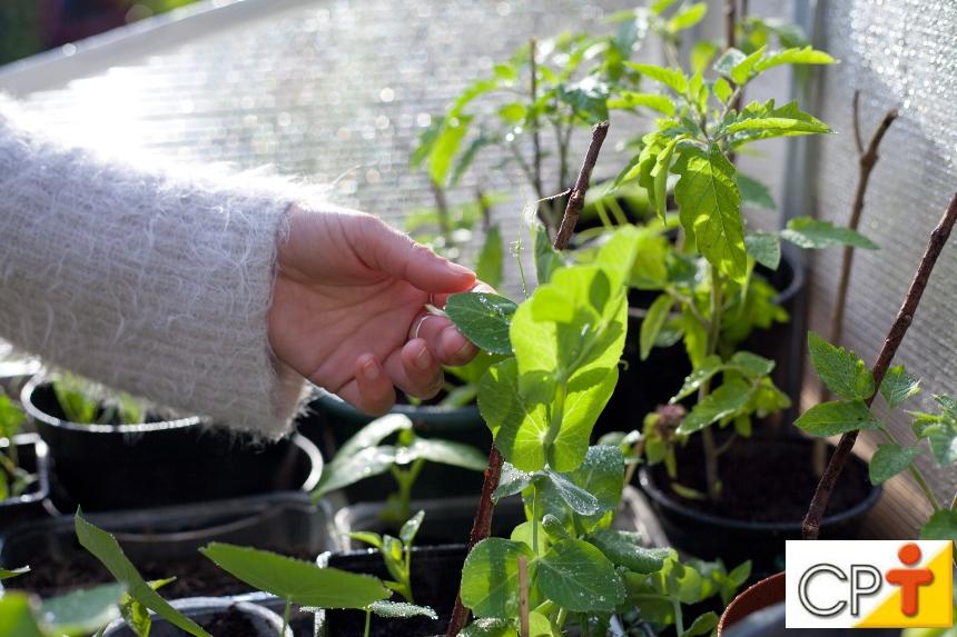 Mudas de plantas medicinais: instalações básicas   Artigos CPT
