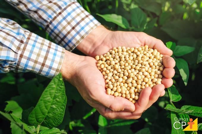 Como aumentar sua produção de soja