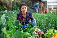 Passo a passo para a construção de uma horta orgânica caseira