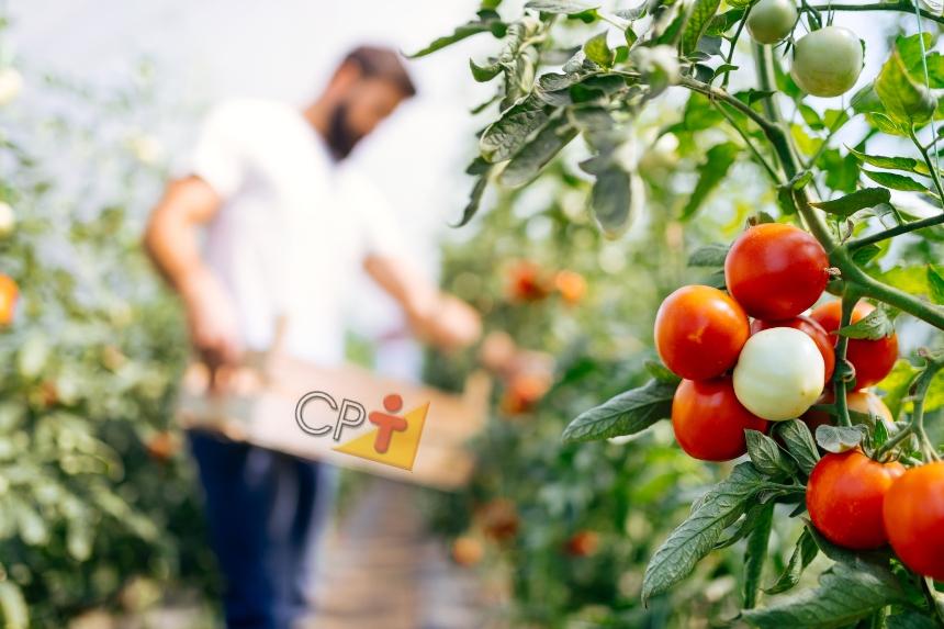 8 dicas de colheita para quem vive da horta   Dicas CPT