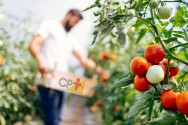 8 dicas de colheita para quem vive da horta