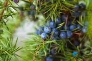 Ervas exóticas e medicinais que podem ser usadas como tempero