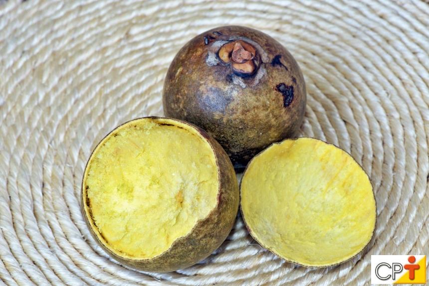 Vai plantar macaúba? Conheça as condições mínimas para o cultivo   Artigos CPT