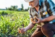 3 fatores que afetam o desenvolvimento das hortaliças