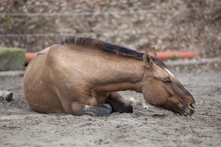 Cavalo caído - imagem ilustrativa