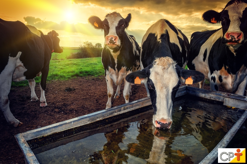 Atenção, veterinários: água boa, de qualidade, animais saudáveis!