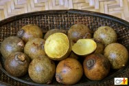 Coco macaúba: como escolher as melhores sementes?