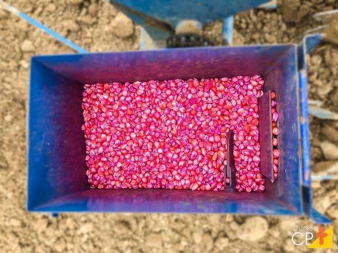 5 importantes práticas agronômicas em cultivo de milho