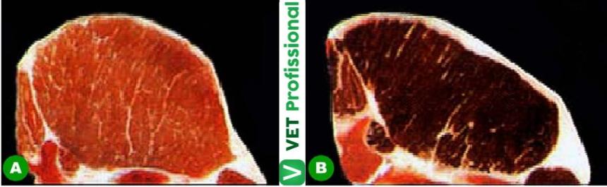 (A) Carne normal e (B) carne DFD Artigos VetProfissional