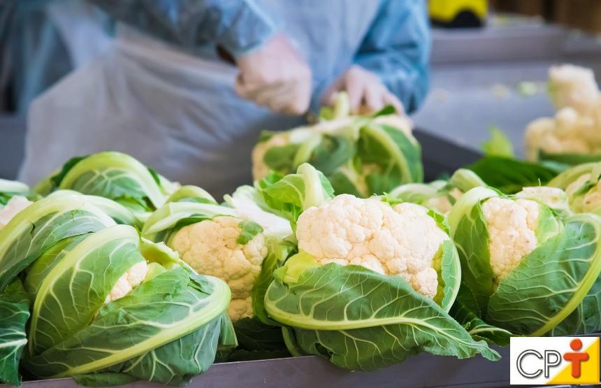 12 dicas para quem vai abrir uma fábrica de processamento de hortaliças   Artigos CPT