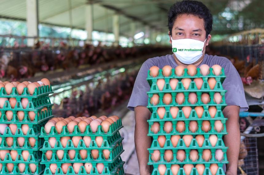 O fator Luz nas fases de cria e recria de galinhas poedeiras  VetProfissional Artigos