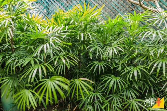 5 palmeiras (coqueiros) para plantar em jardins