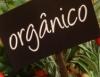 Agricultura orgânica tem amplos objetivos de saúde, econômico e social