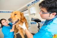 Quais equipamentos são necessários para montar um pet shop com banho e tosa?