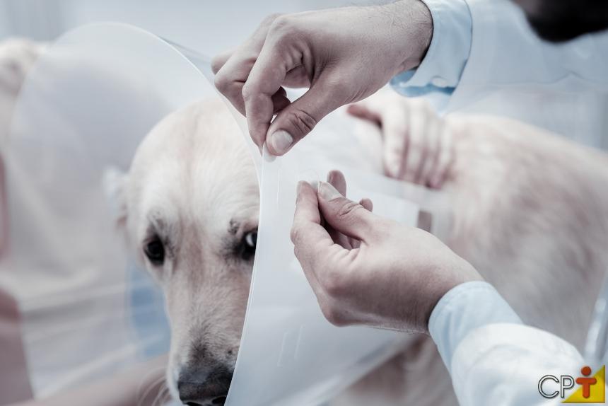 Ovariohisterectomia em pequenos animais: cuidados no pós-operatório   Artigos CPT