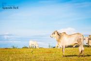 A importância de garantir um conforto térmico para animais de produção