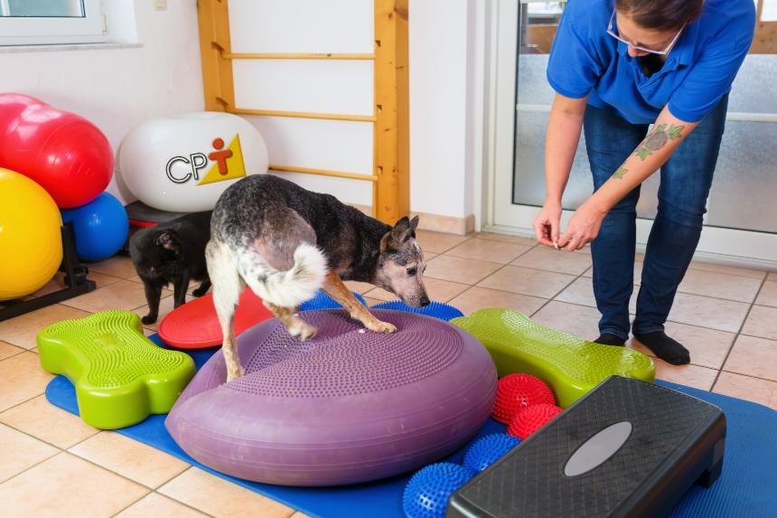 Fisioterapia e reabilitação animal: infraestrutura para o atendimento   CPT