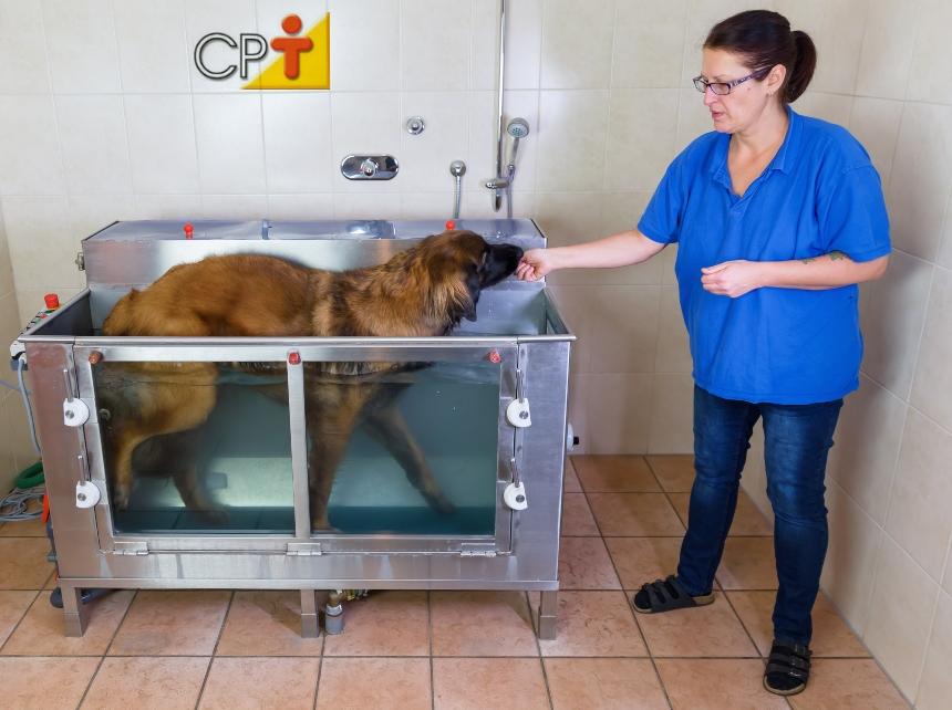 Centro de fisioterapia e reabilitação animal: estruturas físicas   Artigos CPT